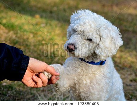 dog shaking hands with his master as a sign of friendship