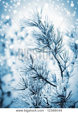 Christmas Background With Frosty Pine Tree