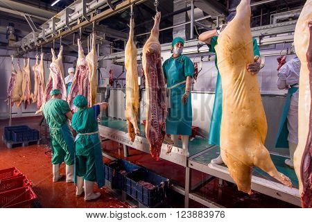 Ulan-Ude, Russia - March 1, 2016: Carcasses of pigs in row in meat factory.