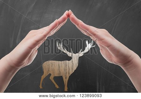 Hands protecting deer draw on blackboard as animal protection and poaching concept