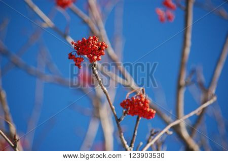 Red berries on a tree branchRed berries on a tree branch