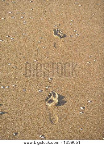 Picture or Photo of Solitary footprints on the sands of ormond beach florida (daytona beach area).