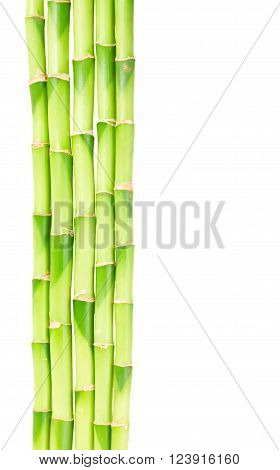 green bamboo stems border isolated on white background