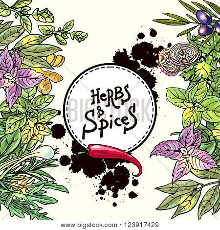 Beautiful hand drawn vector  illustration of culinary herbs and spices