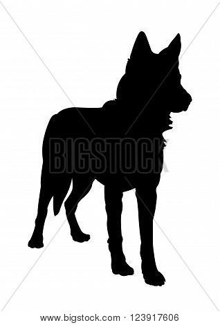 Czechoslovakian Wolf dog Silhouette on White Background