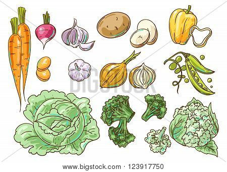 Set of beautiful hand drawn illustration vegetables. Food top view