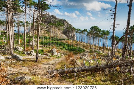 Path among the tall pines and rocks in the autumn forest Shaan-Kaya Crimea Russia