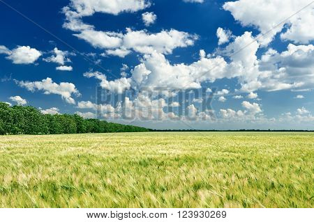 spring landscape, green field and blue cloudy sky