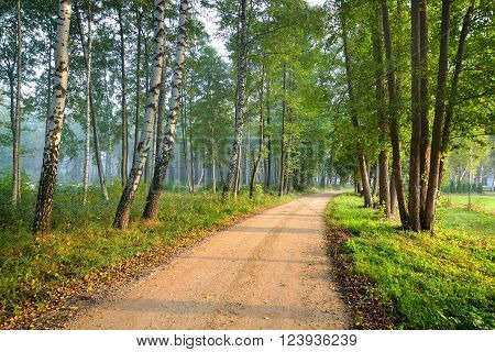 Rural road through a green summer deciduous forest with birch trees in fog.