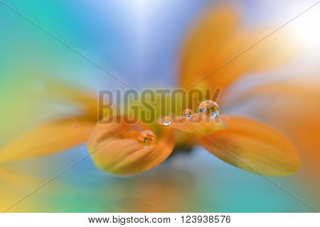 Flower with Waterdrops on Blue and Green Background... ** Note: Soft Focus at 100%, best at smaller sizes