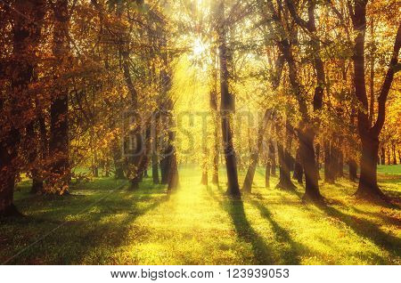 Autum pictorial landscape - yellowed forest at the sunset. Soft focus and vintage warm tones processing