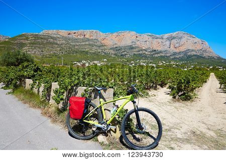 Xabia Javea Montgo vineyards biking MTB  in Alicante Spain