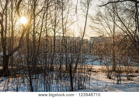 Footpath in a snowy deciduous forest during sunset and sun glowing through trees