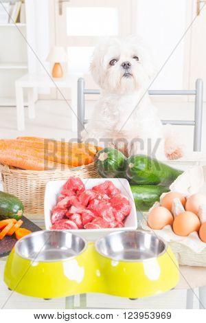 Preparing natural natural, organic food for pets at home