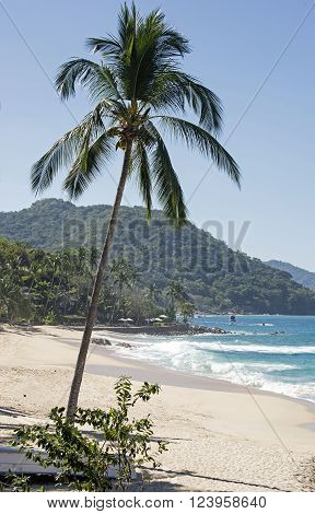 Beach with palm tree in the Banderas Bay by Puerto Vallarta Mexico