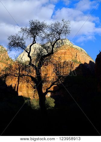 Silhouette of tree with canyons and sky in Zions