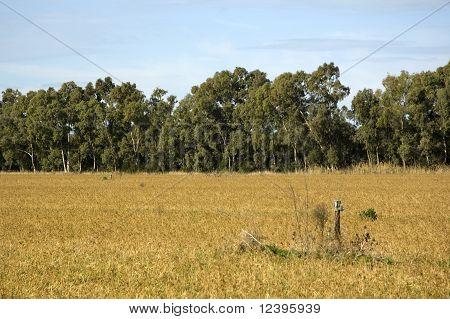 Landscape Of Maccarese Fregene, Near Rome (fiumicino), Italy.