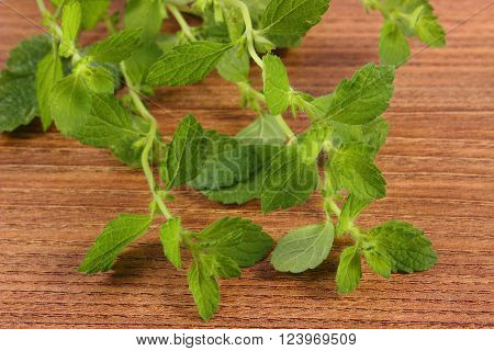 Fresh green lemon balm on wooden table sedative herbs concept for healthy nutrition and herbalism