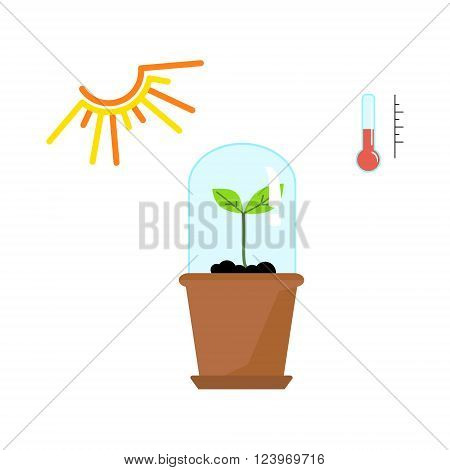 Line sprout and plant growing. Linear nature leaf, grow tree, garden and flower, organic gardening, eco flora. Timeline infographic of planting tree process, business concept flat design.