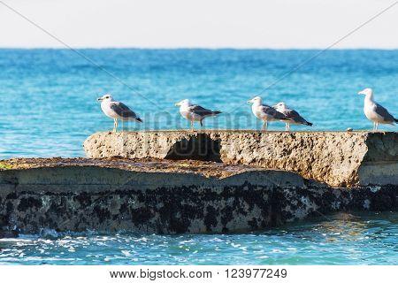 Seagulls On A Breakwater.