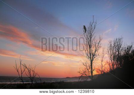 Currawong Sunset