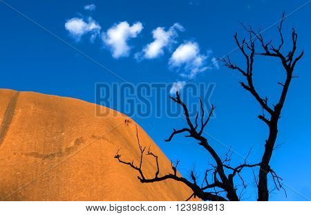 Silhouette of a dead tree against a blue sky with Ayers Rock, aka Uluru, Australia