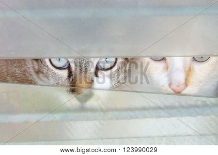 cute two cats in the window louvers