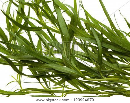 Tarragon Twigs Background