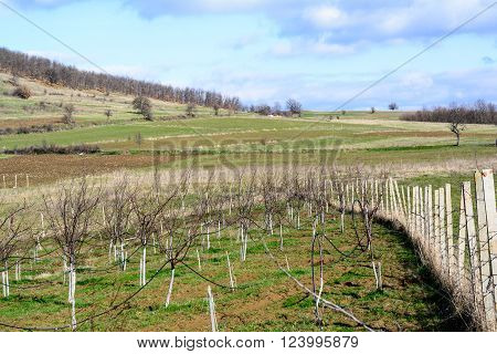 Garden with fruit trees enclosed by concrete stakes