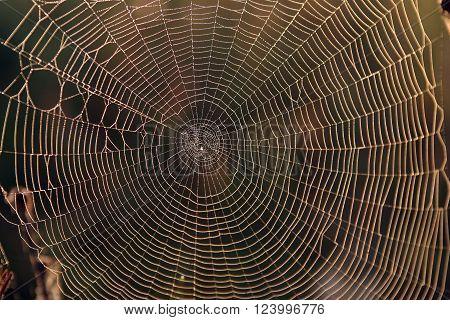 Macro - spiderweb in dew at sunset