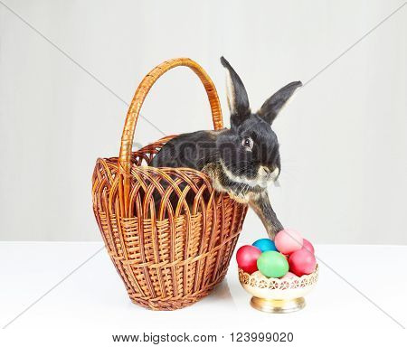 In the basket Black rabbit reaches out to a vase with Easter eggs