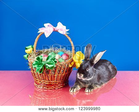 Cute bunny and Easter basket on the blue background