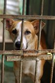 picture of animal cruelty  - sad looking dog behind kennel in shelter please adopt and have a friend for life - JPG