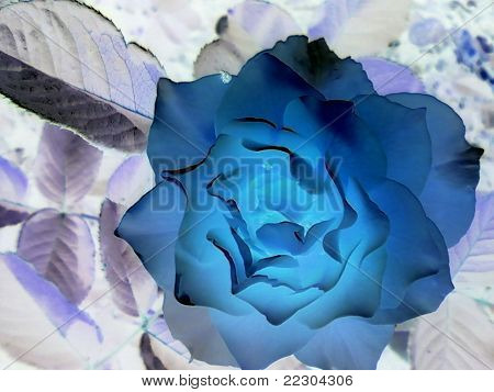 Flower in negative