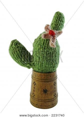 Bound Cactus Isolated On White