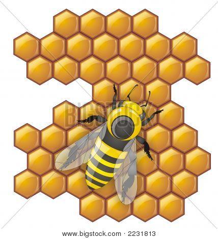 Honey_Bee_Hive