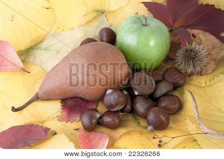 Autumnal Fruit Composition
