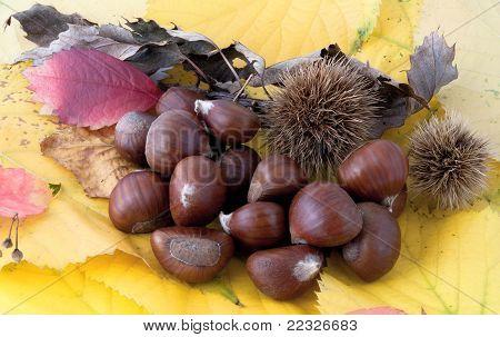 Autumnal Composition