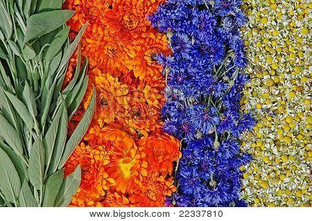 Sage,marigold,cornflower And Chamomile