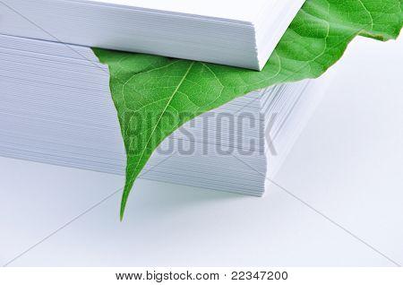 Leaf In Stack Of Paper