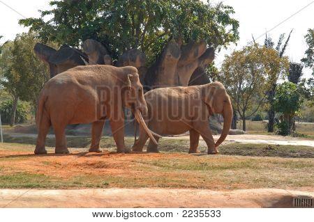 Elephant 6