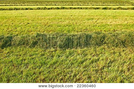 The Lines Of Hay