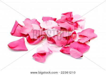 Pink Petals over White