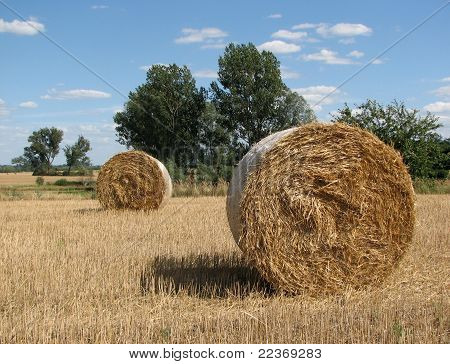 Sheaves Of Golden Hay