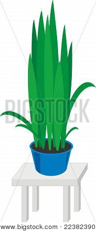 House plants in blue pots on gray table