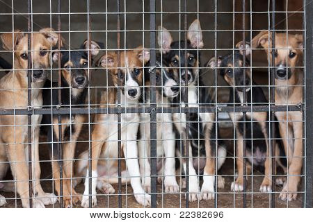 Many Puppies Locked In The Cage