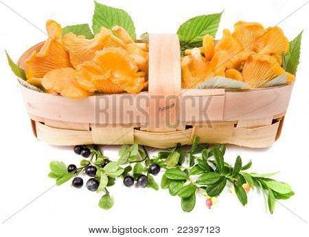 fresh mushrooms chanterelles into basket  isolated on white background