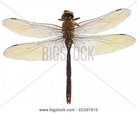 dragonfly isolated on white