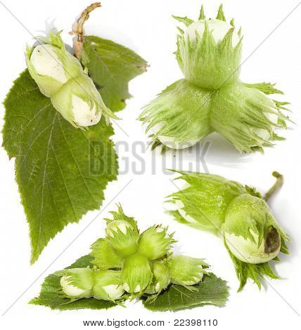 green unripe hazelnuts - isolated