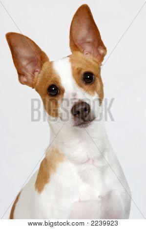 Puppy Poser